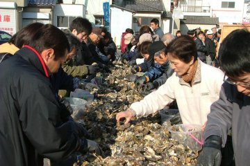 Oyster festival where you can pick your own