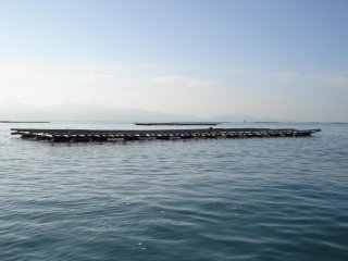 An oyster bed sitting calming in a bay in the Seto Inland Sea