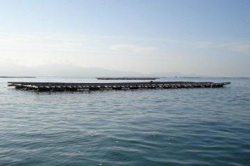 <p>세토 내해의 잔잔한 바다에 떠 있는 굴 양식장</p>