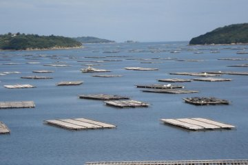 Oyster beds scattered in a bay