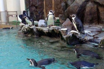 Second Oldest Aquarium to Close