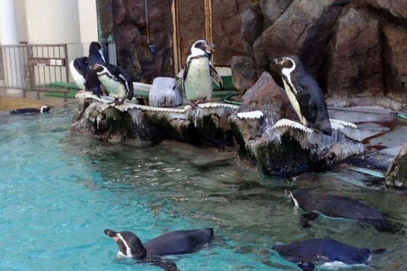 Penguins in the atrium