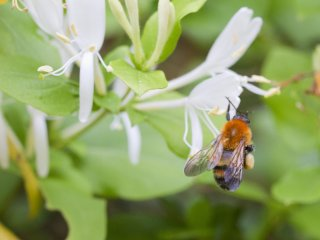 A leisurely stroll allows time to watch a bumblebee and appreciate their hard work
