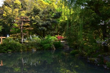 여기 또 다른 아름다운 정원. 늦은 봄의 푸른 초목이 연못 표면에 반사되어 있다