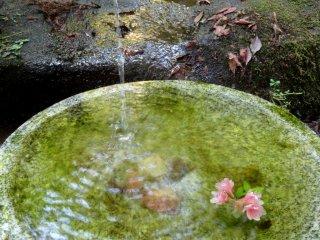A single azalea blossom floats in a water basin