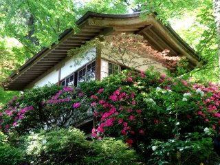 This is one of Kyushu's best spots for azaleas, yet the grounds never feel crowded