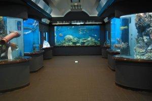 Bên trong Viện hải dương
