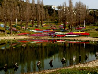 В озере очень красиво отражаються цветы