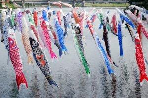 Des banderoles de carpes au dessus de la rivière Kase dans la campagne de Saga
