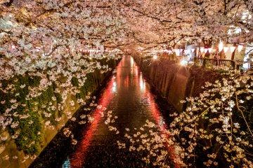 Naka-Meguro's Spring Illumination
