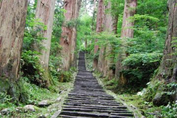 Mount Haguro's avenue of cedar trees. These 350 to 500 year old trees were younger when Basho visited.