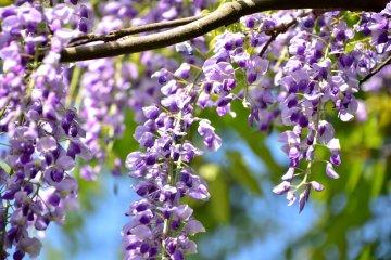 바람에 흩날리는 작은 꽃들