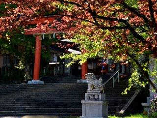 午後の藤島神社入口