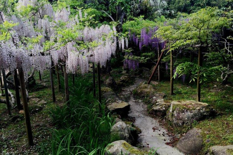 50 sắc thái của tử đinh hương, cẩm chướng, và hoa loa kèn trắng