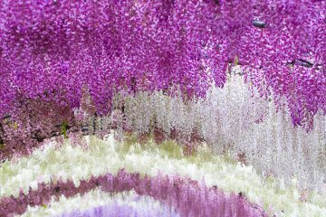 <p>Millions and millions of blossoms</p>