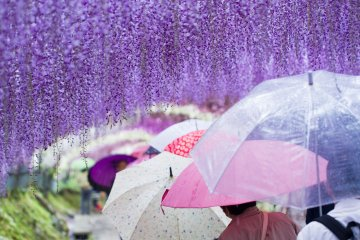 <p>The rain doesn&#39;t hold the crowds back</p>