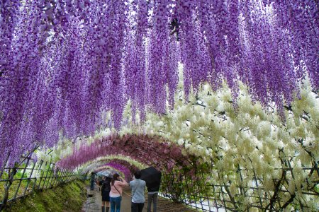 Fukuoka Prefecture Japan Travel Tourism Guide and Travel Map