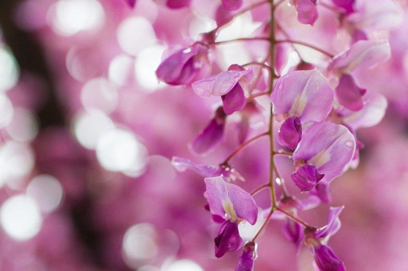 <p>A pink variety up close</p>