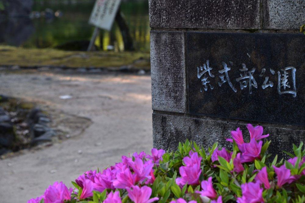 ピンクの綺麗なツツジに彩られた紫式部公園入口