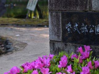 The side entrance of Murasaki Shikibu park was decorated with pretty pink azaleas