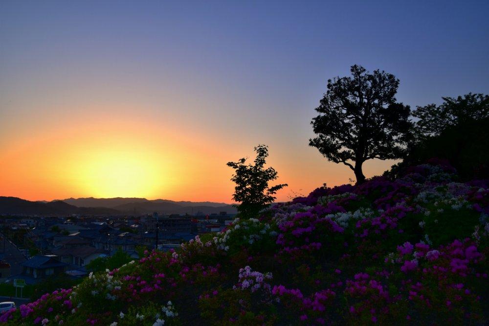 อาทิตย์ตกดินเหนือภูเขาทางทิศตะวันตก วิวที่มองจากสวรรค์ดอกอะเซลเลีย  สวนนิชิยะมะในฟุคุอิ