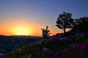 غروب الشمس فوق جنة الأزاليا بفوكوي