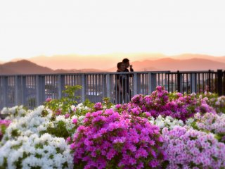 คู่รักกำลังเดินข้ามสะพานในสวนนิชิยะมะ ในระหว่างพระอาทิตย์ตกดิน
