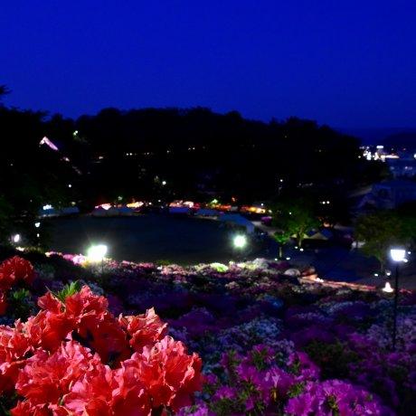 Paradis des Azalées à Fukui de Nuit