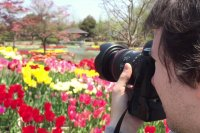 Tonami Tulip Fair 2015