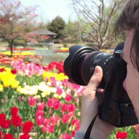 Tonami Tulip Fair 2015