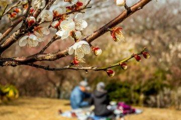 요코수카의 타우라 공원