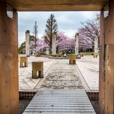 Yamashita Park's Cherry Blossoms
