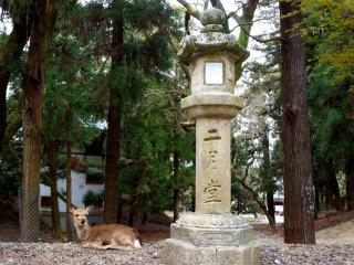 '니가츠도(二月堂)'가 새겨져 있는 석등과 쉬고 있는 사슴