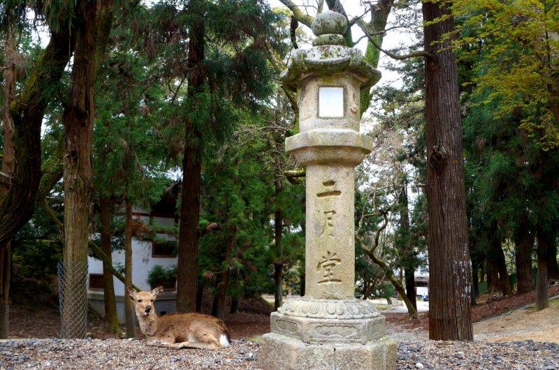 <p>&#39;니가츠도(二月堂)&#39;가 새겨져 있는 석등과 쉬고 있는 사슴</p>