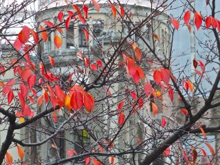 These photos were taken at the end of November:Hiroshima's Atomic Bomb Dome