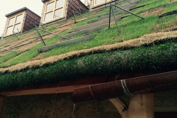 The roof is covered by lawn hence it needs water