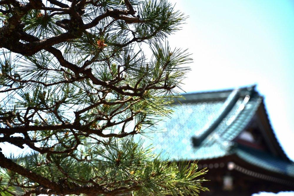 日本庭園の松の枝と、エメラルドグリーンの本堂の屋根