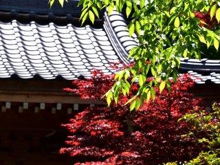 新緑と赤い紅葉に彩られた寺の屋根