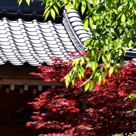 Verdant Shougenji Temple in May