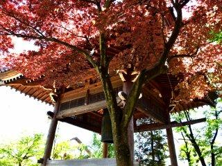신선한 빨강과 초록 잎으로 둘러싸인 종탑