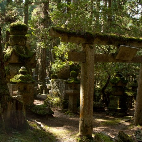 Japan's Most Beautiful Graveyard