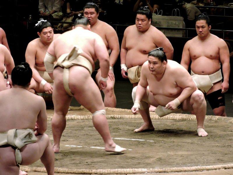 <p>Sumo wrestlers squaring up</p>