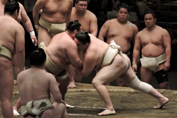 <p>A braced sumo wrestler is pushed across the ring by another wrestler</p>
