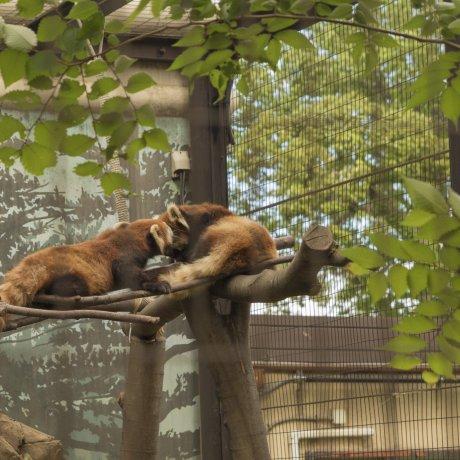 Kebun Binatang Yumemigasaki