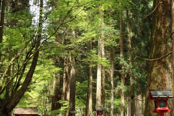 <p>The ancient cedar-lined path to Okunomiya.</p>