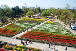 Tulips are use to design the Hokuriku Shinkansen