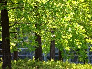 Daun hijau segar berseri-seri di bawah sinar matahari yang cemerlang