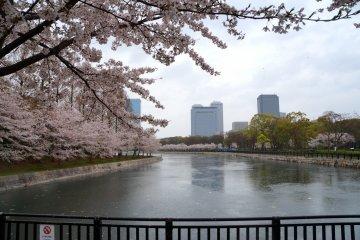 <p>오사카 성 주변 호숫가에 흐드러지게 핀 벚꽃들</p>