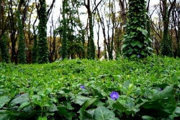 <p>성 주변에 푸르게 핀 나무들과 꽃들이 너무 아름다웠어요.</p>