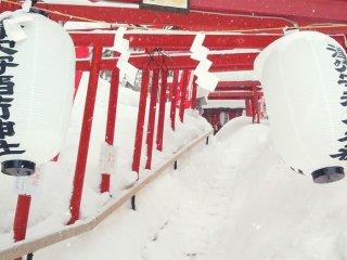 Сотни храмовых ворот в парке Саино Кавара. Выкрашенный в красный цвет заметно и красиво выделяются на фоне снежно-белого мира. Я постараюсь взобраться наверх, когда там не будет снега!